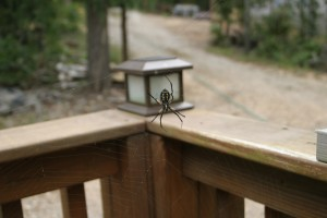 Spider on the deck