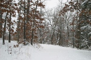 Driveway in snow 2010