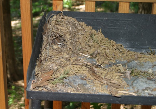 Our Mamma Wren and Babies Have Left the Nest